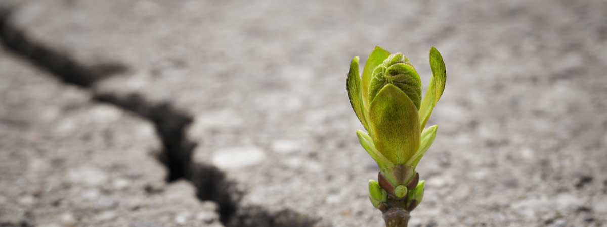 Plant Budding Through a Crack in the Concete of Adversity