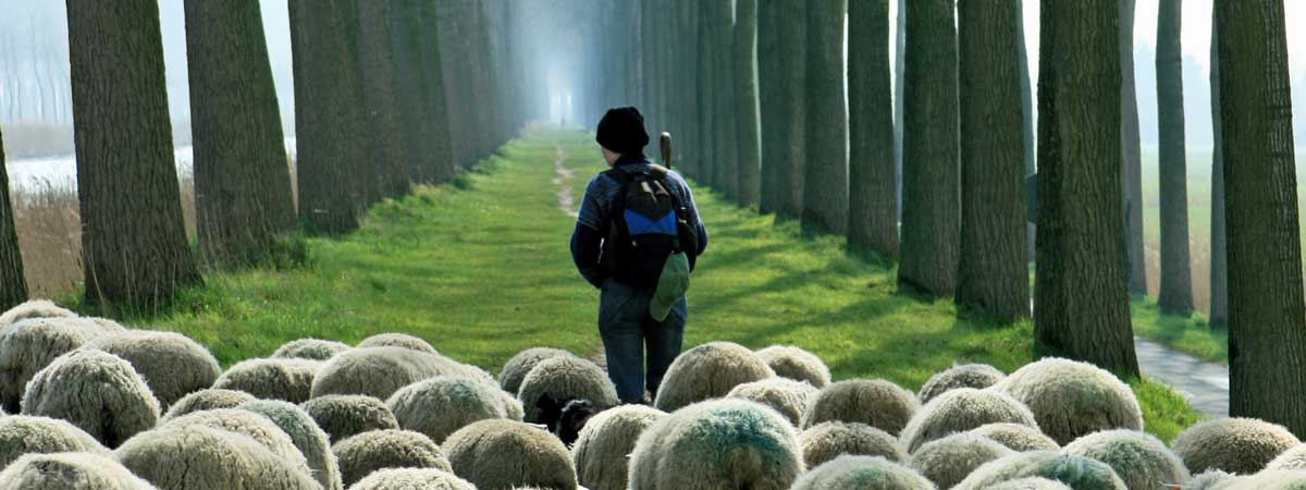 Shepard Leading Flock of Sheep through a Grove of Trees